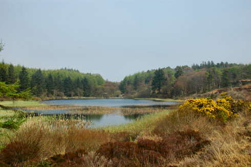 Picture of a calm loch (lake) surrounded by trees and wild landscape