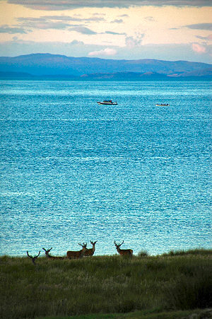 Picture of a skiff following a rigid inflatable, watched by deer on the shore