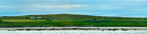 Picture of a panoramic view over a sandbank with dozens of seals