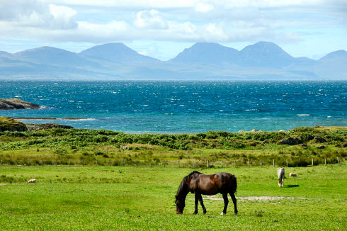 Picture of some distinctive mountains (The Paps of Jura) seen from another island (Isle of Gigha). Horses on a field in the foreground
