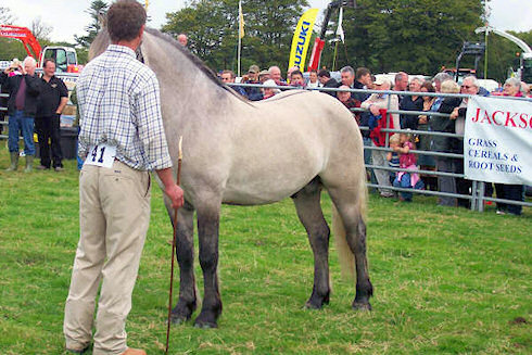 Picture of a pony held by its owner at an agricultural show