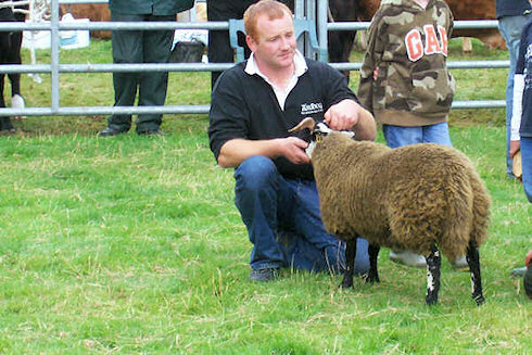 Picture of a lamb with its owner at an agricultural show