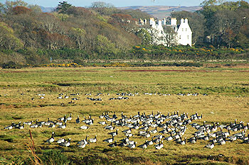 Picture of a large white house with salt marshes and geese in the foreground