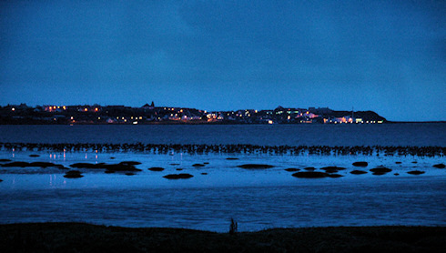Picture of geese roosting on mud flats with a village in the background, at last daylight