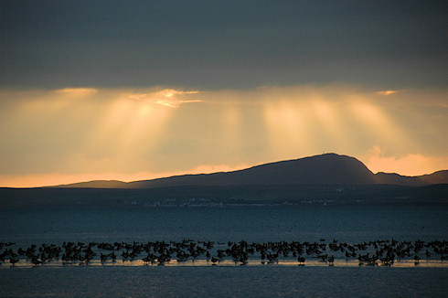 Picture of geese roosting on a sea loch, dramatic late afternoon light in the background