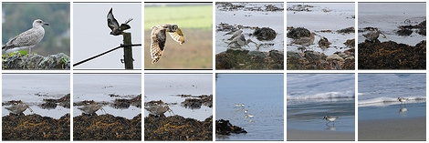 Screenshot of a collection of bird pictures