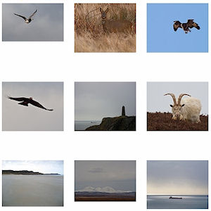 Screenshot of thumbnails of various pictures by Scott Lamont