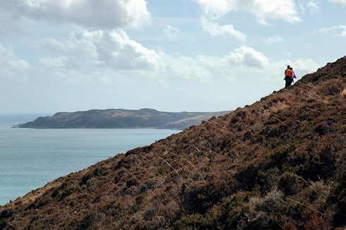 Picture of walkers on a steep hillside, a bay behind the crest of the hill