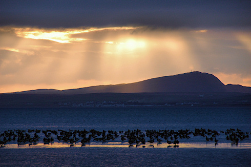 Picture of geese roosting on a sea loch, low afternoon sun and the other side of the loch in the background
