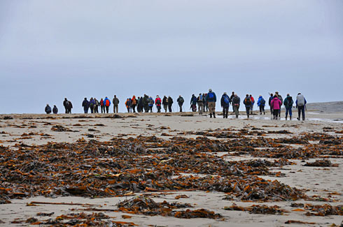 Picture of a group of walkers on a beach with seaweed