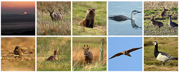 Screenshot with thumbnails from a flickr set showing Islay wildlife pictures