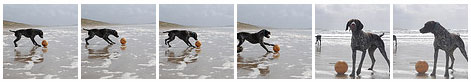 Screenshot of a gallery of a dog on a beach