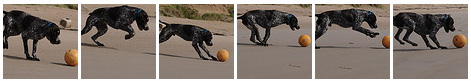 Screenshot of a gallery with a dog playing on a beach