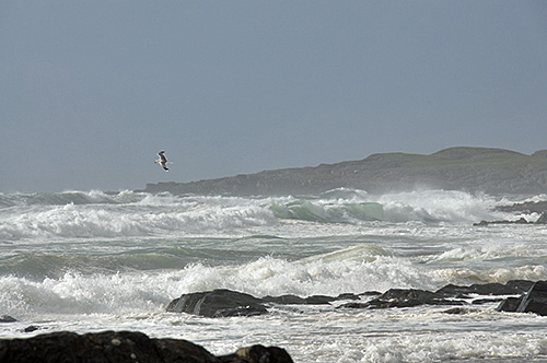 Picture of a bay with waves rolling in and breaking on the beach, a bird flying past