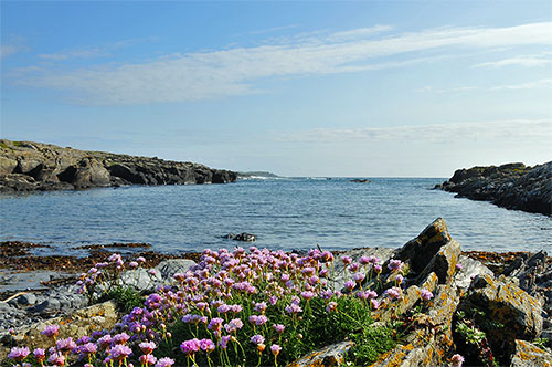 Picture of flowers on a rocky shore at a small inlet