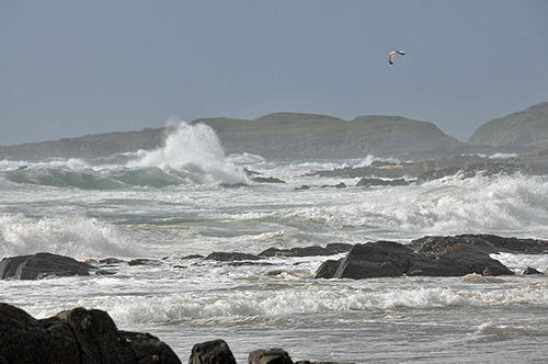 Picture of waves breaking in a bay with rocks, a gull flying above