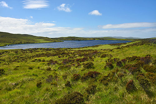 Picture of a freshwater loch in a green landscape